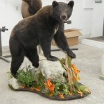 Timberline Taxidermy Colorado Springs